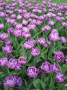 Violet Flowers On Field Stock Images - 2401394