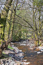 Stream In The Woods Royalty Free Stock Image - 24008136