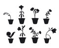 Shadows Flower Pots Royalty Free Stock Photography - 24019607