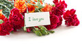 Bouquet Of Red Carnations Royalty Free Stock Photos - 24028268