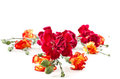 Bouquet Of Red Carnations Royalty Free Stock Photography - 24028597