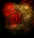 Red Roses Stock Photography - 24034552