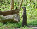 North American River Otter Stock Photography - 24043072