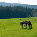 Horses On Pasture Royalty Free Stock Images - 24050049