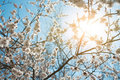 Background Of Spring Sky Royalty Free Stock Image - 24056636