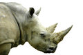 White Rhino Stock Photos - 24057703