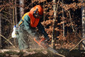 Cutting Branches On Spruce Tree Stock Image - 24065671