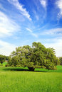 Picturesque Landscape With Lonely Tree Stock Photography - 24072062
