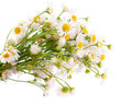 Bouquet Of Daisies Field Royalty Free Stock Photo - 24091715