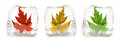Three Maple Leafs In The Ice Cube Stock Photo - 24097870