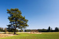 Lonely Pine Tree In Spring Landscape Royalty Free Stock Photo - 24099125