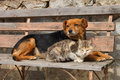 Cat And Dog Stock Image - 2412981