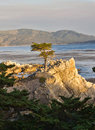 Lonely Cypress Tree Stock Photography - 24101572