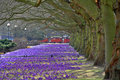Spring In Poland Royalty Free Stock Image - 24102006
