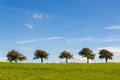 Five Trees On A Row Stock Image - 24141531