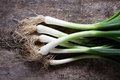 Spring Onions Stock Photography - 24147662