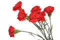 Bouquet Of Carnations Royalty Free Stock Photos - 24176268