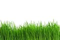 Wheat Grass Stock Images - 24179694