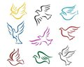 Pigeons And Doves Royalty Free Stock Photos - 24225288