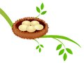 Bird Nest Royalty Free Stock Photos - 24252958