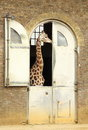Giraffe House Royalty Free Stock Photos - 24269808