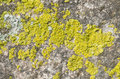 Lichen Covered Stone Royalty Free Stock Images - 24283479