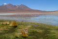 Flamingos On Lake In Andes Stock Photo - 24286190