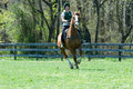 Galloping In Field Royalty Free Stock Photography - 24300167
