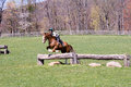 Jumping Horse In Field Royalty Free Stock Photography - 24300187