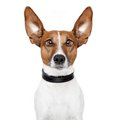 Crazy Dog With Big Lazy Eyes Stock Image - 24306831