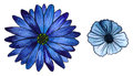 Blue Flowers Royalty Free Stock Image - 24326806