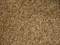 Grass Seed, Close Up Royalty Free Stock Photos - 24333508