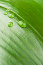 Water Droplets On A Leaf Stock Photos - 24337463