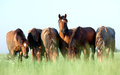 Group Of Horses In Field Royalty Free Stock Photo - 24343345