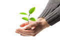 Young Plant In Human Hands Stock Images - 24350844