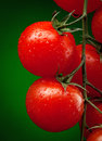 Tomato Branch With Water Drops Stock Images - 24391994