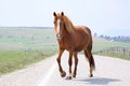 Horse On The Road Royalty Free Stock Photos - 24404188