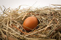 Egg In Straw Nest Stock Photography - 24409562