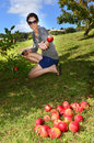 Fruits And Vegetables - Apple Royalty Free Stock Photo - 24413225