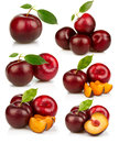 Set Of Ripe Red Plums Fruit  On White Royalty Free Stock Images - 24449089