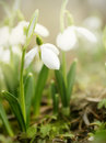 Spring Is Here! Stock Photography - 24453602