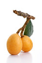 Isolated Loquats Royalty Free Stock Photo - 24468215