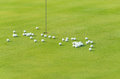 Group Of Practice Golf Ball On Green Royalty Free Stock Photo - 24469515
