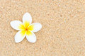 White Flower On Sand Beach Stock Photos - 24470233