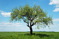 Lonely Tree Stock Photography - 24483522