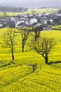 Beautiful Spring Rural Landscape In China Royalty Free Stock Photography - 24486537