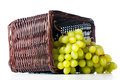 White Grapes In A Wicker Basket Stock Image - 24496711