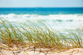Green Grass On Sandy Dune Overlooking Beach Royalty Free Stock Image - 24500376