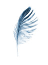 Feather Royalty Free Stock Photo - 24520815