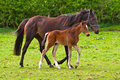 Horse And The Foal Royalty Free Stock Photography - 24528647